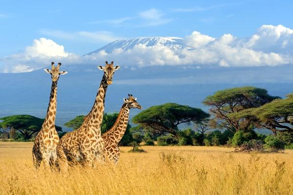 Kilimandjaro incentive trip