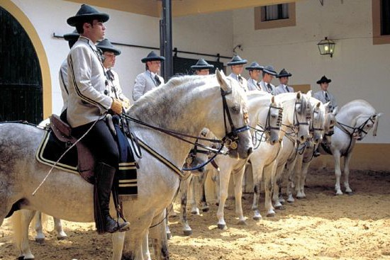 Seville royal Andalusia horse school